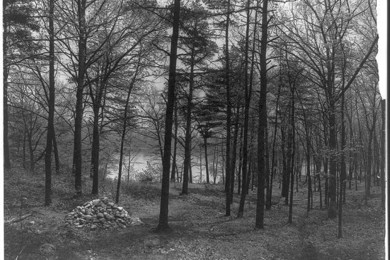 massachusetts-il-bosco-dove-costruA-la-capanna-thoreau-foto-del-1908